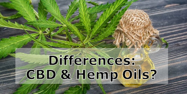 What is the Difference Between Cannabis Oil and Hemp Oil?