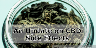 Side Effects of Cannabis Oil – An Update