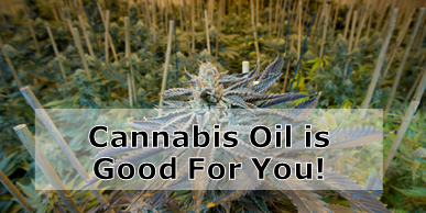 Cannabis Oil is Good for You – We Explain it Here